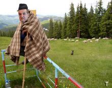 Cioban disperat