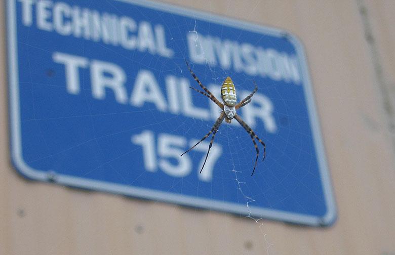 Trailer_157_Banana_Spider.jpg