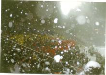 Odinioara, ningea cu pasiune...